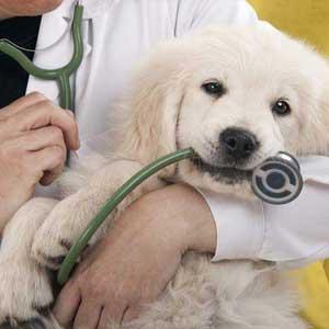 Veterinarian in Avon, NY   Avon Animal Hospital